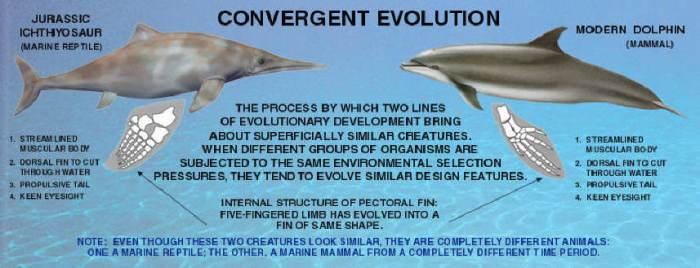 CONVERGENT EVOLUTION (1)